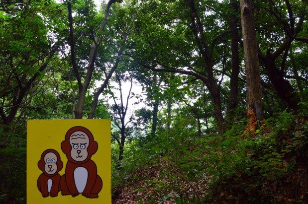 Los únicos monos que vi